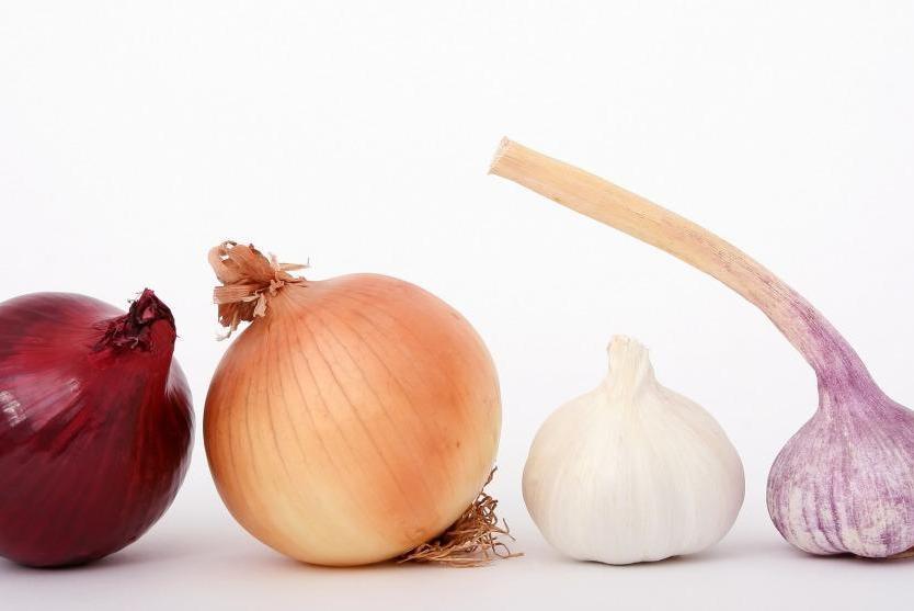 Die Zwiebel – Das besondere Heilmittel