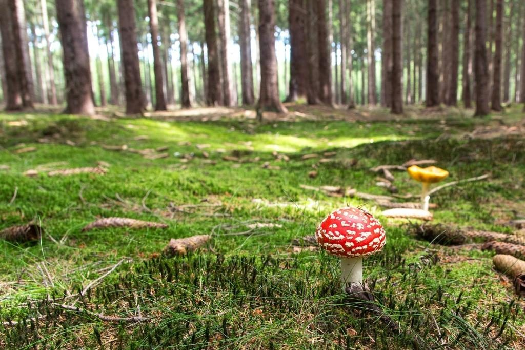 DIY: Die Kreativ-Kids basteln Waldwichtel