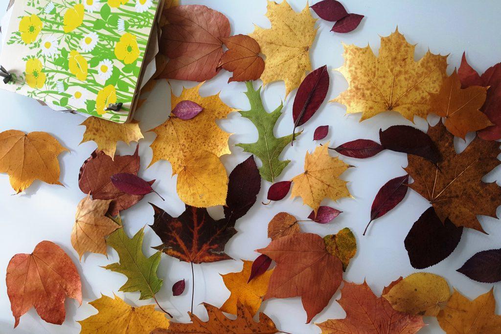 DIY: Eule aus bunten Herbstblättern