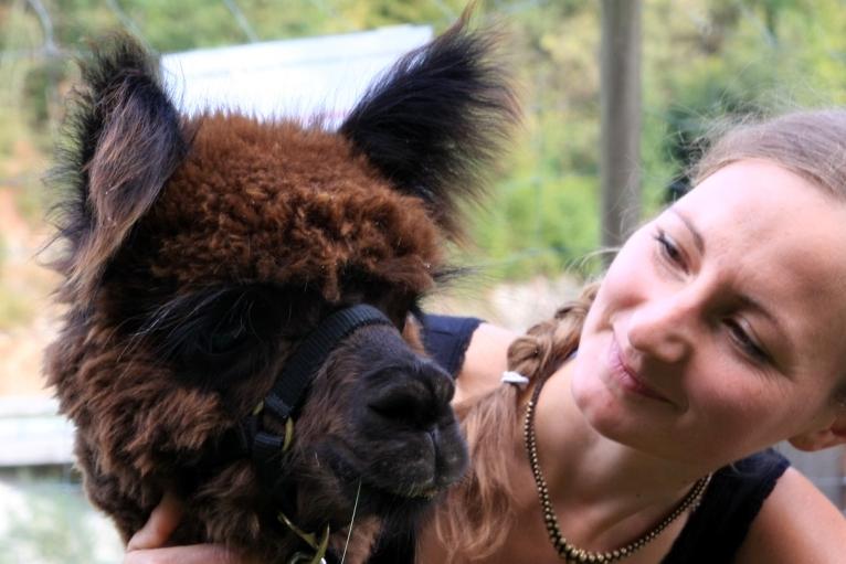 Peru meets Schwarzwald: Die Alpaka-Zucht von Familie Prunu