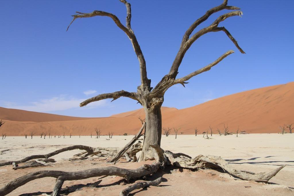"""Lernen erweitert große Seelen"" – Reisetipp Namibia"
