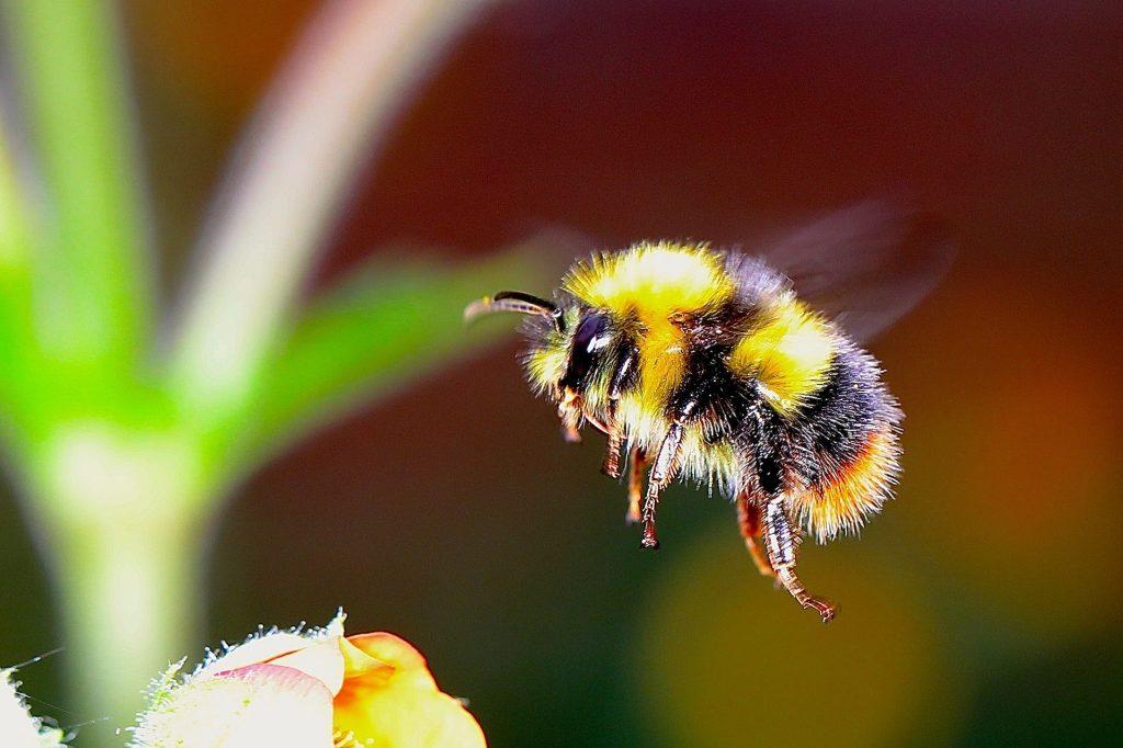 Zählen, was zählt: Insektensommer 2019
