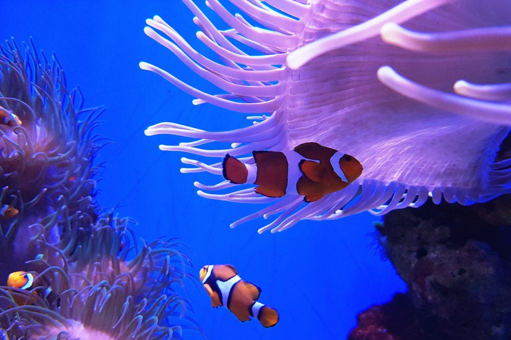 Das Meeresmuseum Stralsund